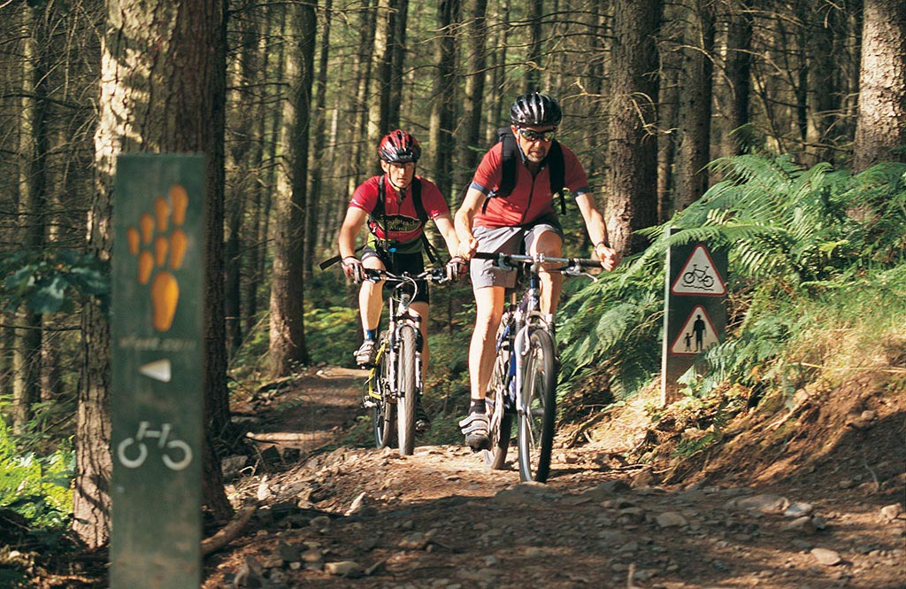 cycling-woods_resized