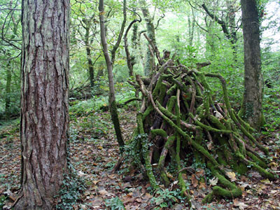 Rhododendron Pyramid in Mixed Woodland