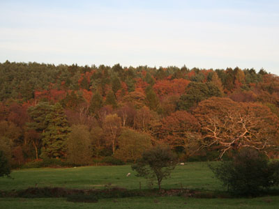 Warm Colours in Early November